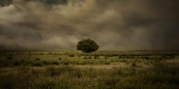 eenzame-boom-100x50