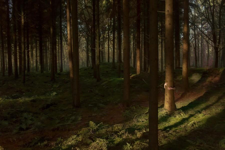 bos-handen-105x70